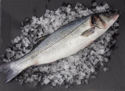 Full Sea Bass